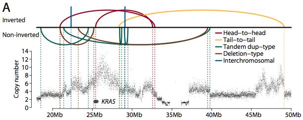 Rearrangement/Amplification of KRAS (Credit: Nature).