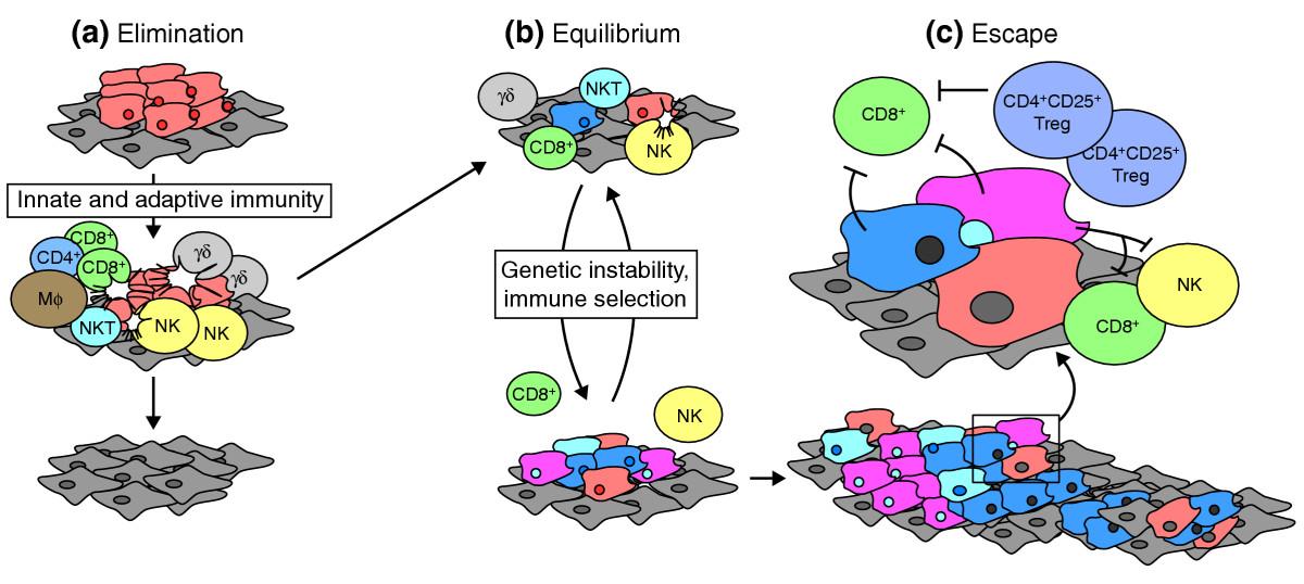 Credit: Strausberg, Genome Biol. (2005) 6:211