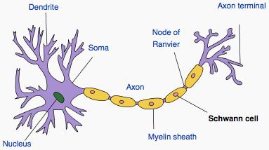 Picture of Neurofibromas on MedicineNet